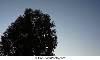 Living Bird Tree Silhouette - Silhouette of a large, bird...
