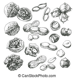 Nut set - Vector art-illustration which represents the...