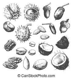 Set of nuts - Vector hand-drawn illustration that represents...