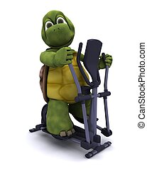 Tortoise with a cross trainer