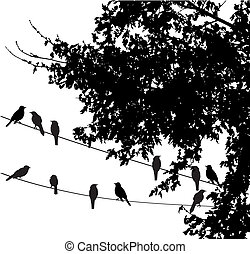 Birds - Vector illustration of birds on wire