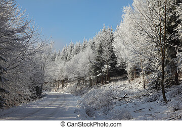 Snow-covered winter wood