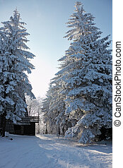 The Tatra Mountains. Forest and rural wooden house - Sunny...