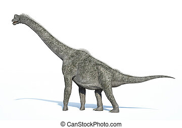 Photorealistic 3 D rendering of a Brachiosaurus. On white...