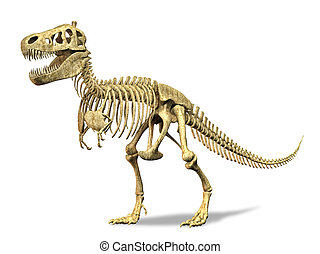 T-Rex skeleton on white background Clipping path included