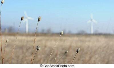 Blurry wind generators on background and flores closeup.