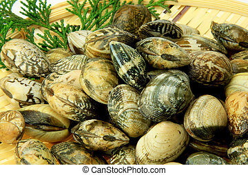 short-necked clam - These are Japanese short-necked clams. I...