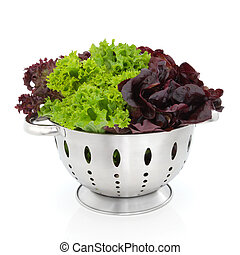 Tricolour Lettuce - Tricolour lettuce of lollo rossa, purple...