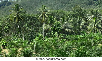 Palms. - Palms in jungle. Thailand.