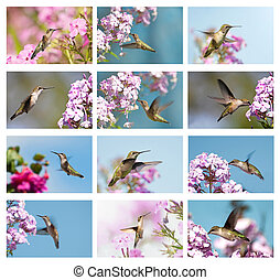 Hummingbird collage. - A beautiful, colorful collage with...