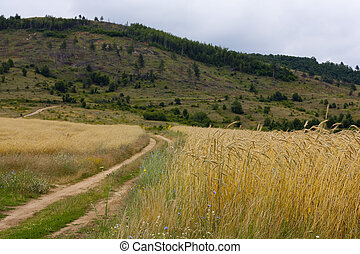 Country side road in Bulgaria