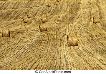 rolling bales on golden fields , Emilia Romagna, Italy,...