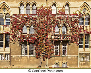 Ivy on Christ Church College - An ivy plant grows up the...