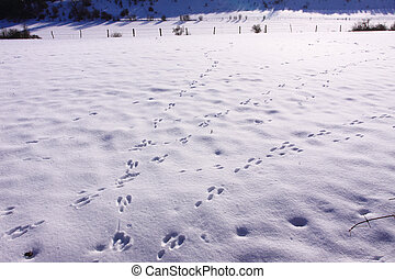 Traces of wild rabbits in the snow in winter