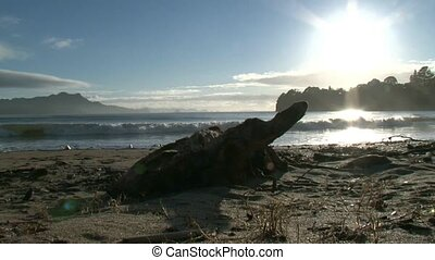 Driftwood on beach - looking over driftwood as waves break...