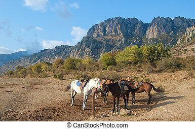 Horses at a hitching post - Ukraine. Crimea. Southern...
