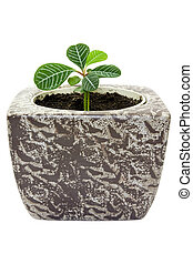 young plant in a pot