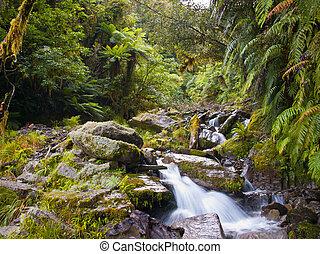 rainforest creek - a wild creek in a lush tropical...