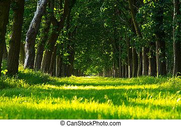 車道, 綠色, 森林