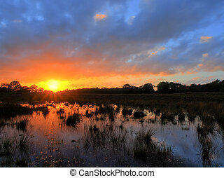 Sunset over dutch heathland with a pond on the foreground