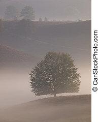 Portrait tree silhouette on hill