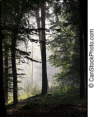 Forest silhouette with misty background
