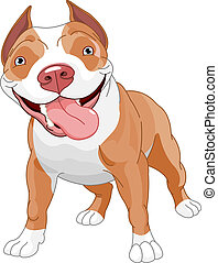 Pitbull dog - Pitbull, standing in front of white background...