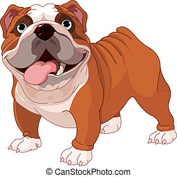 English bulldog - English bulldog , standing in front of...