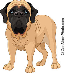 English Mastiff - English Mastiff, standing in front of...