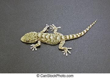 gecko on a dark background