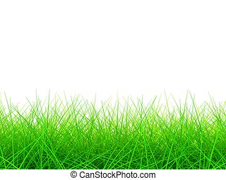 3D Green Grass Background on White