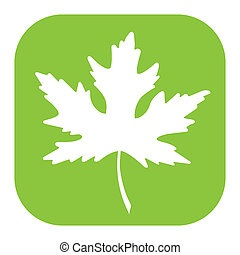 Maple Leaf - Vector Maple Leaf on White Background