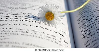 Daisy on a book - Daisy on a open book