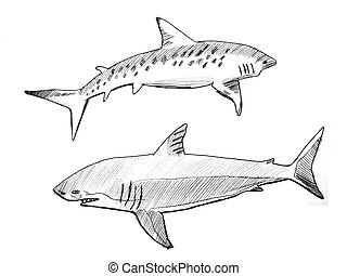 Sharks - pen and ink drawing of two sharks