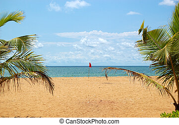 Beach, fronds of palms and turquoise water of Indian Ocean, Bentota,  Sri Lanka