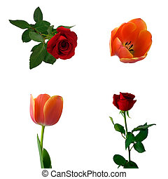 Set of roses and tulips Isolated on white background