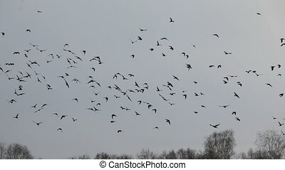 a flock of birds floating in the air in 1080%u04451920 HD...