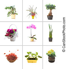 Collection of flowers - Collection of different flowers....