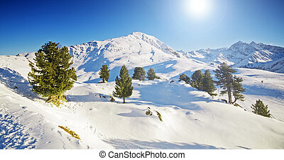 Sunny winter mountain lanscape with trees