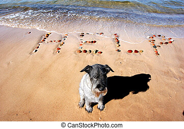 I need your help! - Word HELP on beach sand, made from rocks...