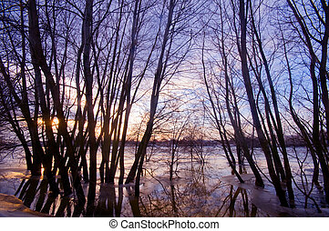 Trees in water, sunset sunset