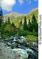 Mountains colorful landscape. Virgin forest in Tatra...