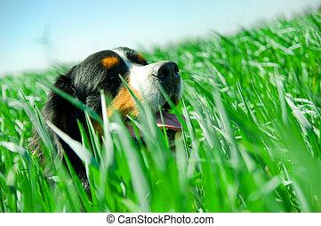 A cute dog in the grass - A cute dog portrait in the grass