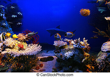 Underwater scene - Underwater background - fishes and coral