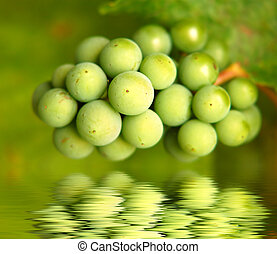 Green grapes - a bunch of green grapes