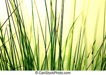 Grass background - Fresh green grass at the mornig sunlight