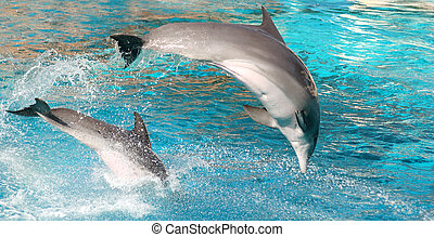 Dolphins show - Two dolphins show