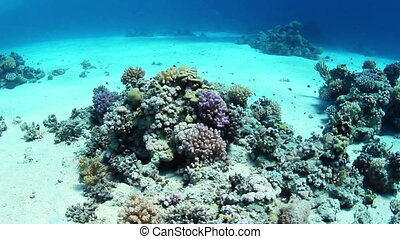 Underwater view on coral reef and fishes.