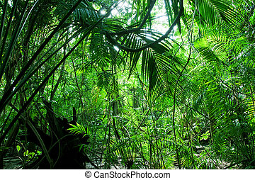 Tropical green forest - Tropical forest, palm trees in...