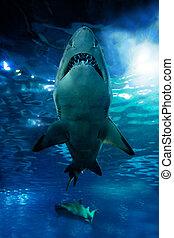 Shark silhouette underwater Danger concept